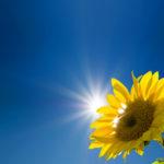 Die Nutzung der Solarenergie